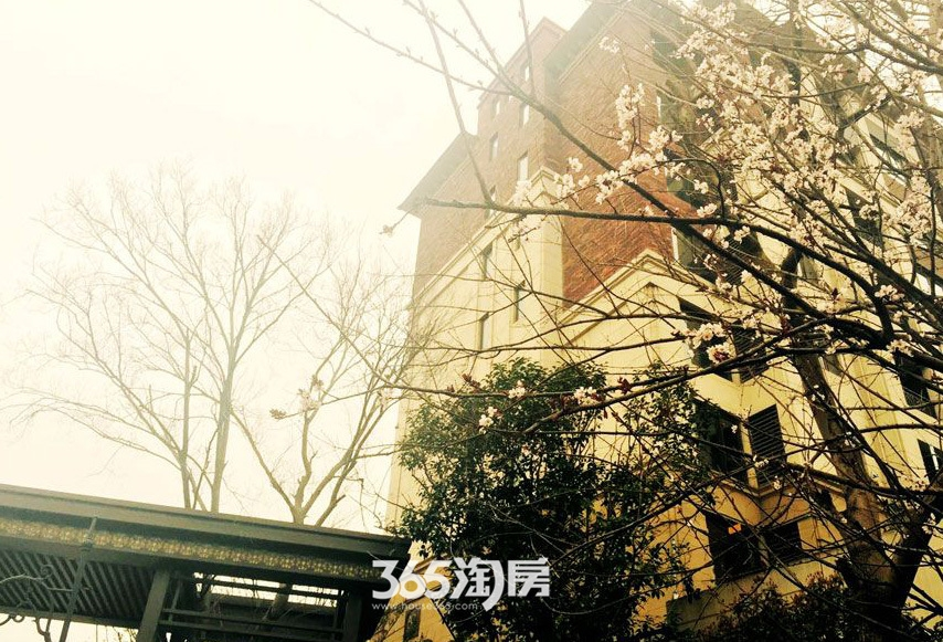 保利西山林语小区梅花实景图(2017.6)